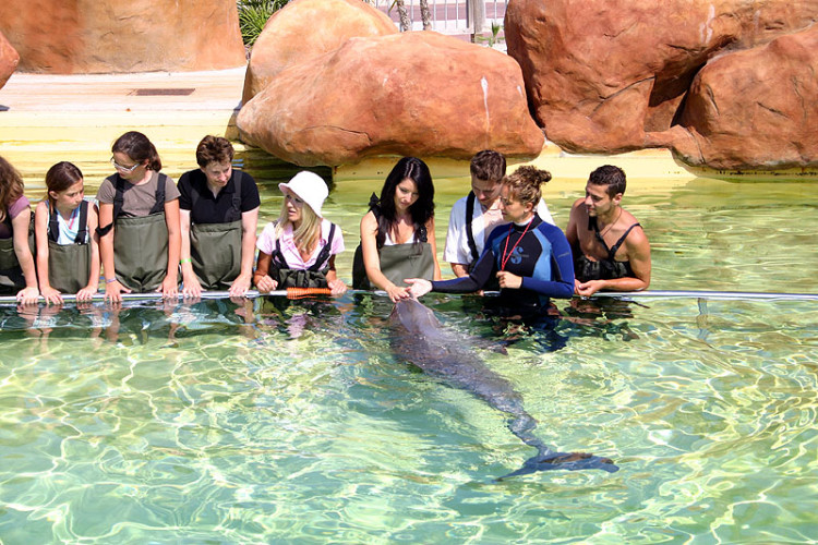 marineland -recontre-dauphin
